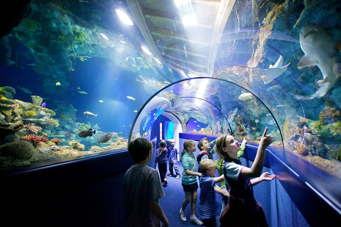 kids in underwater tunnel looking at the fish in the Blue Reef Aquarium, Bristol