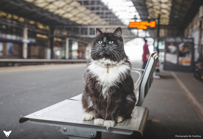 Black and white cat Felix sits on top of a bench in Huddersfield train station