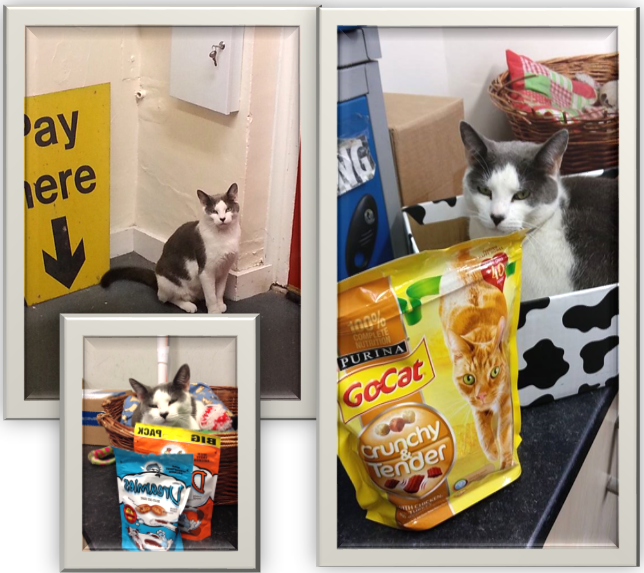 Hector the grey and white cat in three different pictures: One of Hector sitting next to a yellow 'Pay Here' sign, one of Hector laying in his basket with packets of cat treats and one of Hector laying in a box next to a bag of cat biscuits