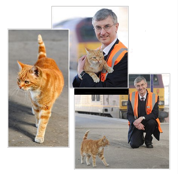 Ginger cat High-Vis in three different pictures: One of High-Vis walking on the platform, one with High-Vis walking next to a train and one with a station worker holding High-Vis in front of a train