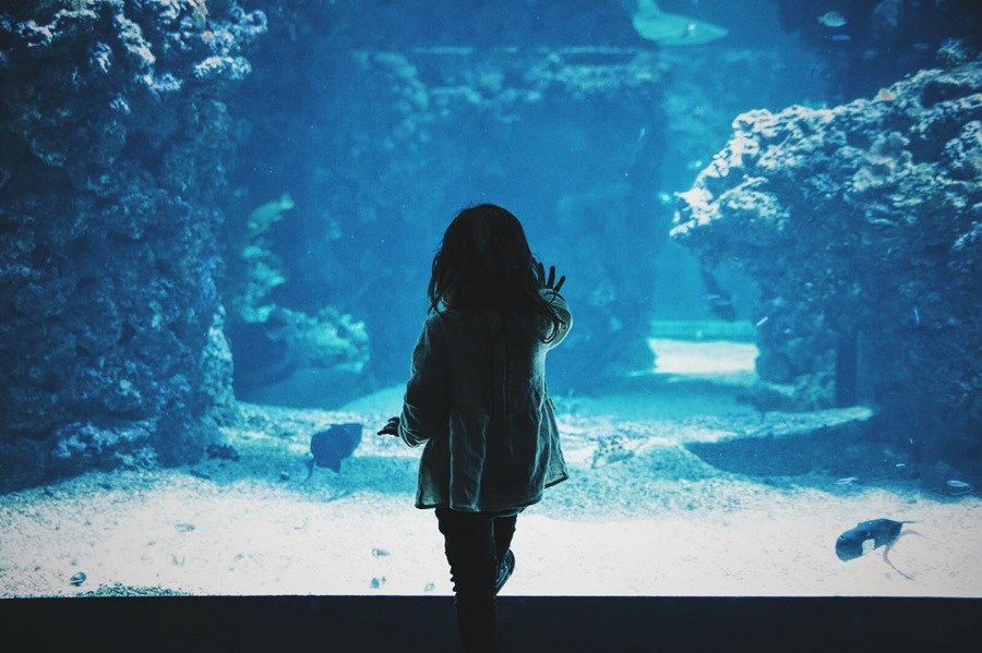 On a family day out to the National Aquarium at Plymouth you can enjoy the surreal under-water landscapes, just as this young girl exploring the aquarium is doing.