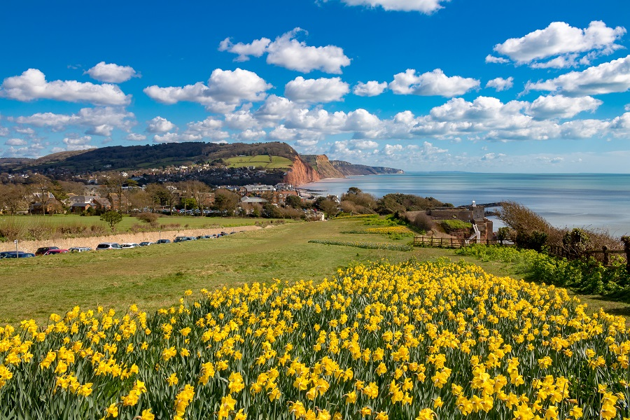 Yellow flowers in the foreground of cliffs and ocean in Devon.