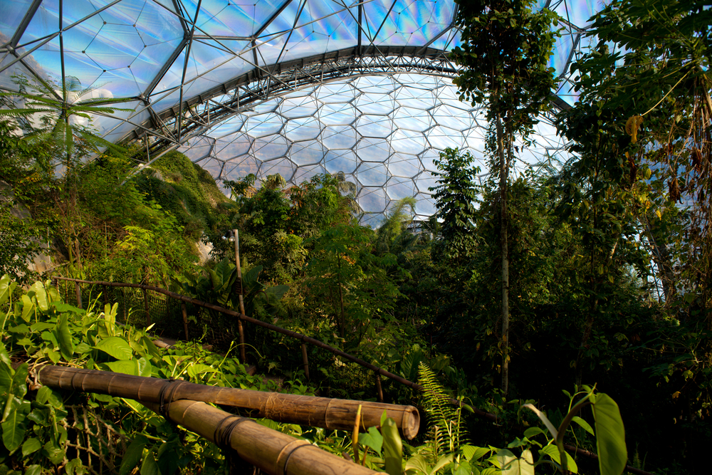 Inside the Rainforest Biome with lush vegetation