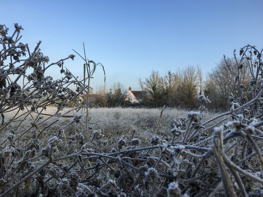 Frost-covered plants in a Cambridge field are one of the sights to enjoy on a Family Christmas Break.